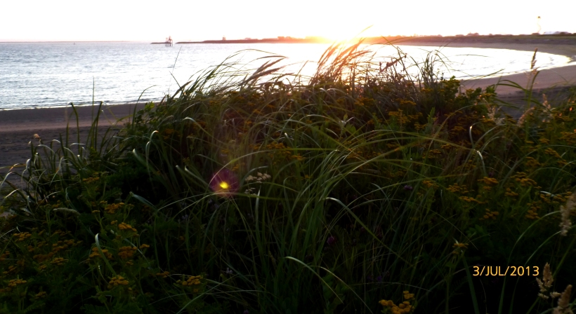 Sunrise through the dunes. (Shiny spot is alien on my lens or alien in grass?)