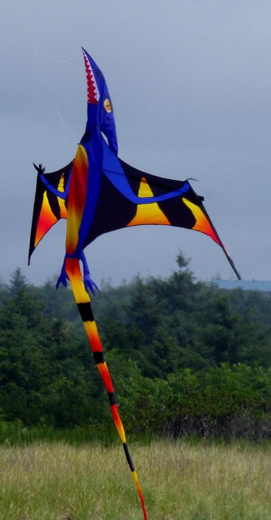Kite Festival on a marine layer morn. Grayland Beach, WA Phall Photo 2013