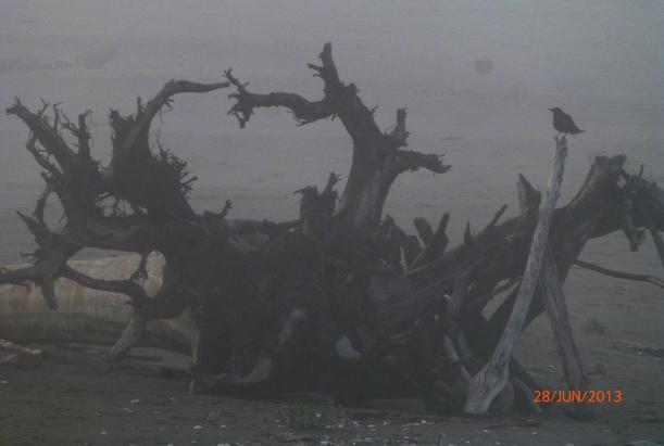 BEFORE CAMERA DIED JUN2013 079