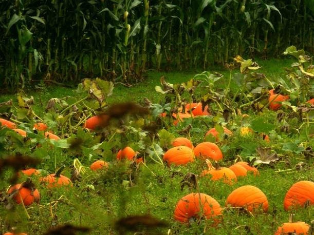 Fall = Pumpkins and Corn=Leslee Phall Photo 2013