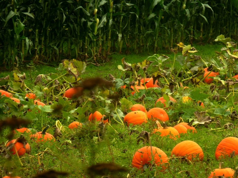 Fall = Pumpkins and Corn=Leslee Phall Photo 2013
