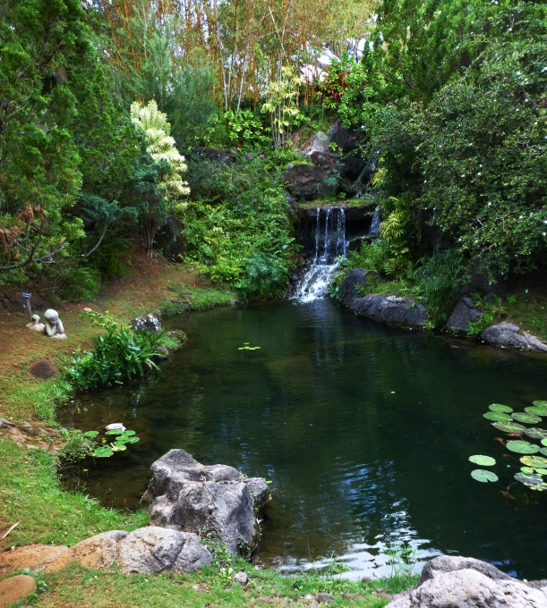 Peaceful Pond. Kauai, Hawaii PHALL PHOTO 2012