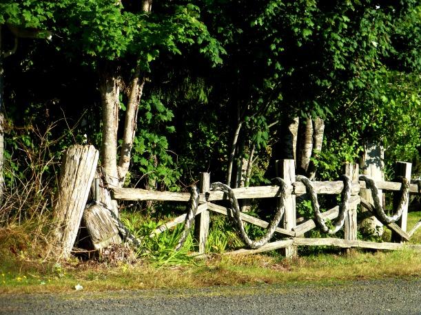 Rustic rope and wood fence. Grayland, WA PHALL PHOTO 2013