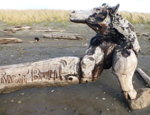 Driftwood Raging Bull Westport, WA PHALL PHOTO 2013