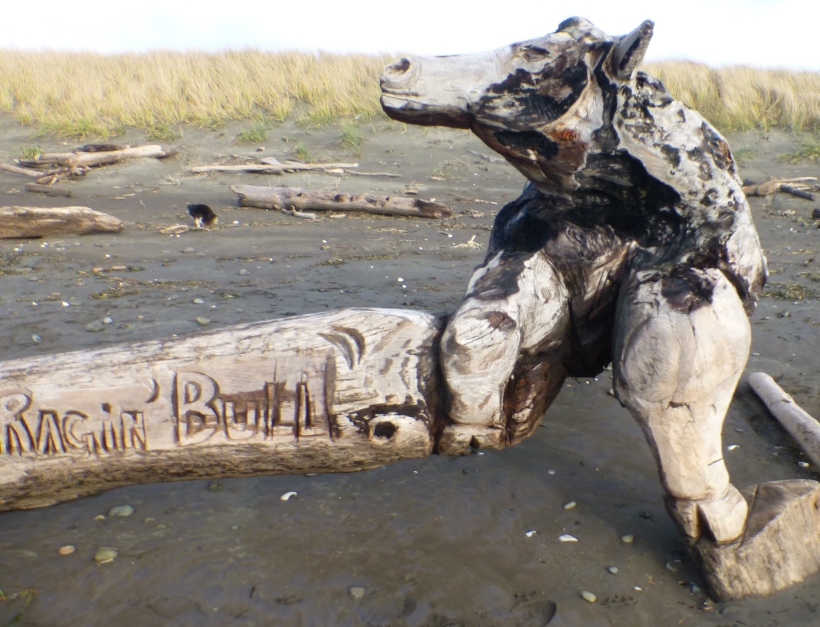 Driftwood Raging Bull Westport, WA PHALL PHOTO 2013
