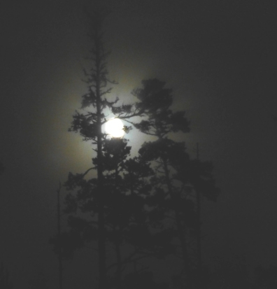 Foggy Moon
