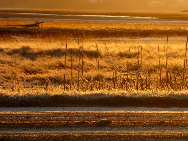 Icy road and frosty grass. PHALL PHOTO 2013