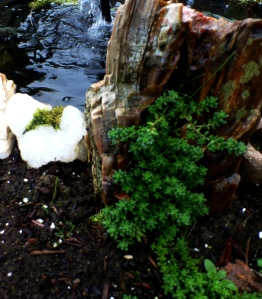 Green bursting from a beautiful piece of petrified wood at the pond's edge. PHALL PHOTO 2013