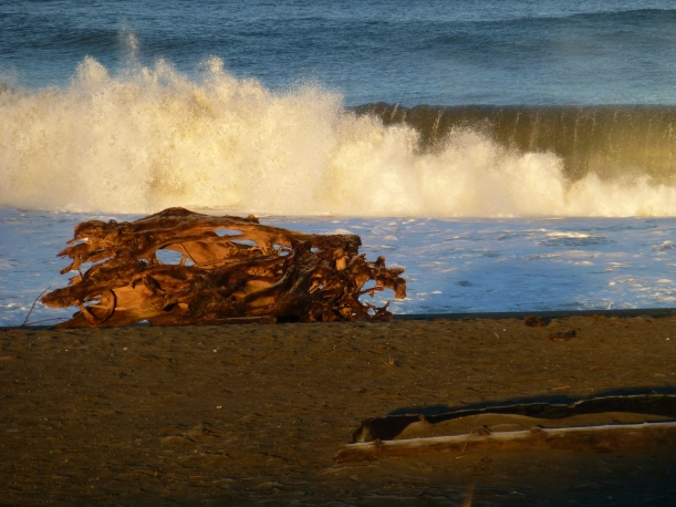 Who made this morning for me, sat this stunning driftwood art here, made these waves roll and crash behind it? I know it was the mermaids:>) PHALL PHOTO 2013