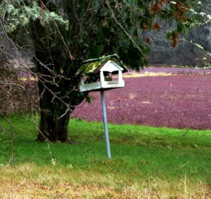 Cranberry bogs & mossy bird feeder. PHALL PHOTO 2013