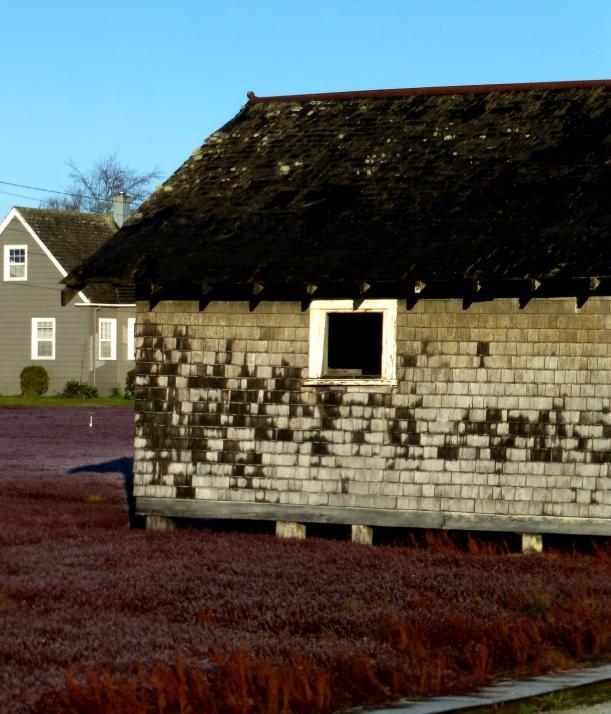 Cranberry bog and shack. PHALL PHOTO 2013