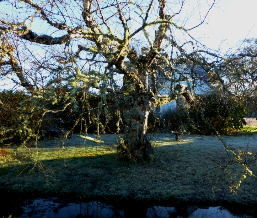 Old tree, swing birdbath and house. PHALL PHOTO 2013