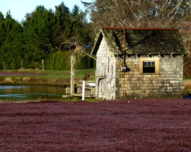 Cranberry bog shack with duck pond. (The envy of the other shacks.) PHALL PHOTO 2013
