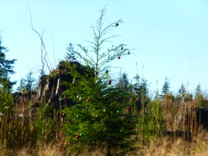 Wilderness Christmas tree. Olympic National Forest. PHALL PHOTO 2013