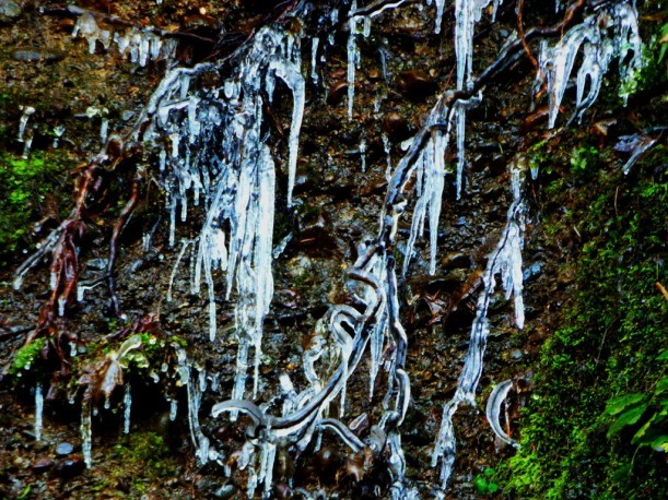 Icicles on mossy rock wall. PHALL PHOTO 2013