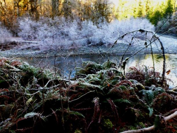 Ghost trees on Wynoochee River. PHALL PHOTO 2013