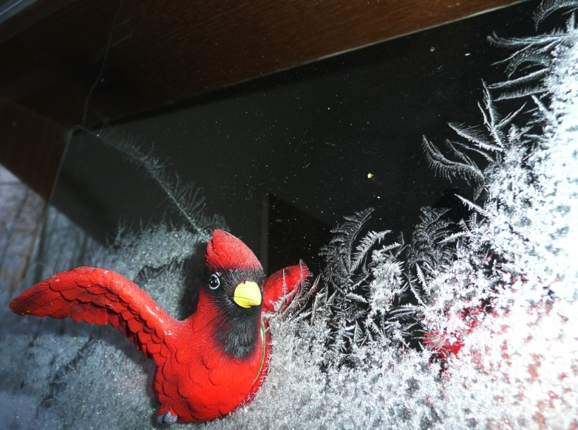 Strange, huh? Front window of my folk's mud room. Magnetic Cardinal surrounded by winter feathery frost.  PHALL PHOTO 2014