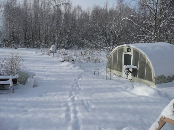 The greenhouse and garden, Eagle River, AK PHALL PHOTO 2014