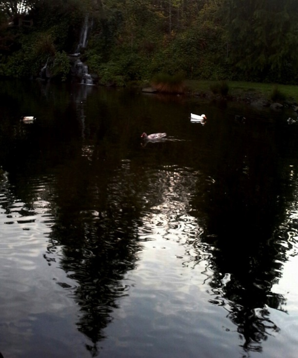 pond and ducks