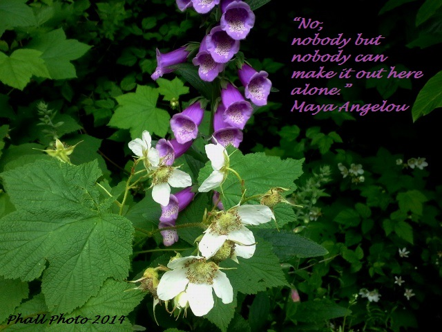 M. Angelou quote